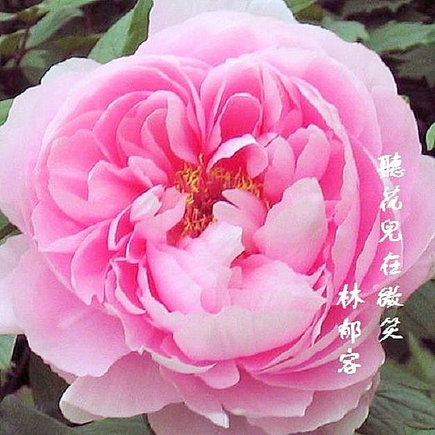 【钢琴】聽花兒在微笑——林郁容 - 山夫 - 天地有大美而不言