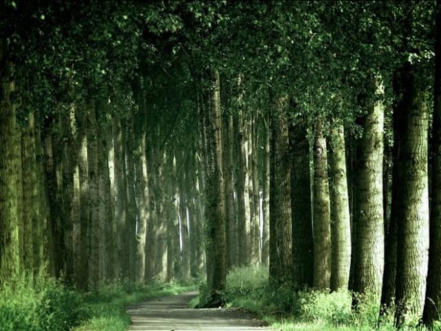 森林狂想曲 森林狂想曲简谱 森林狂想曲钢琴谱